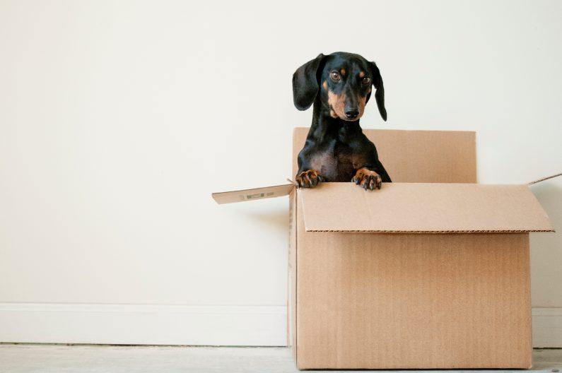 Ein Dackel schaut aus einem Karton. Welche Aufbewahrungsfristen Sie in Ihrem Verein einhalten müssen erfahren Sie in diesem Beitrag.